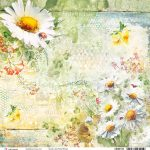 Daisies Double-Sided Paper Sheet 30.5*30.5cm